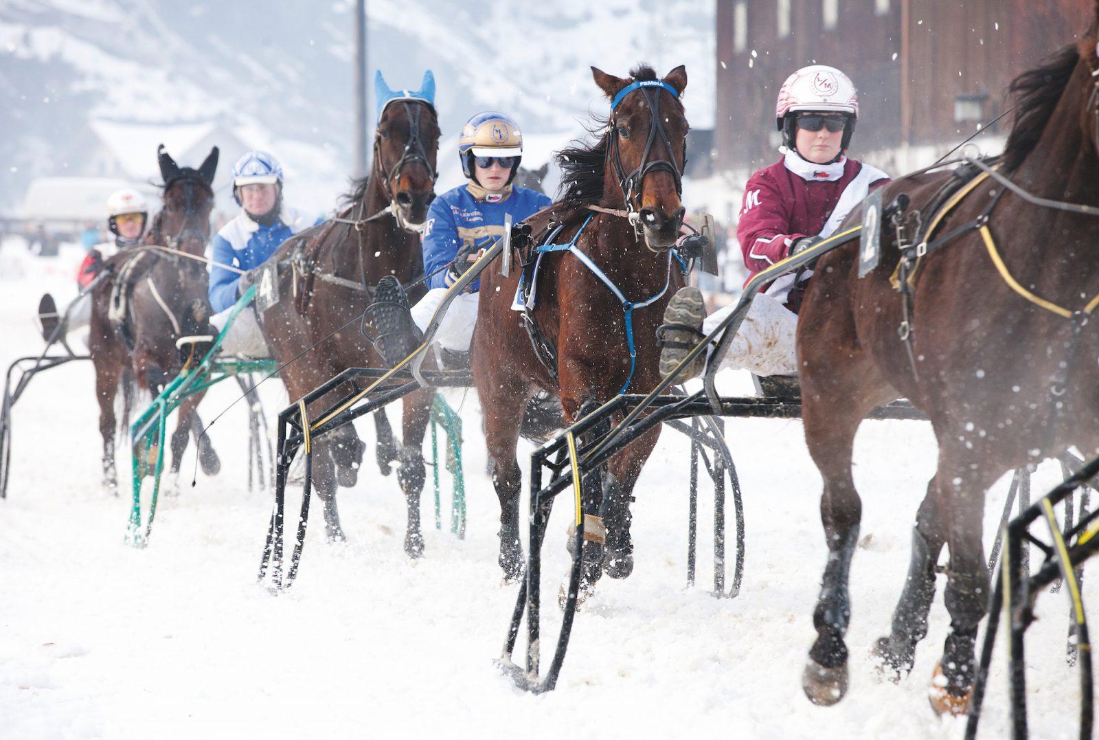 Neujahrs Pferderennen